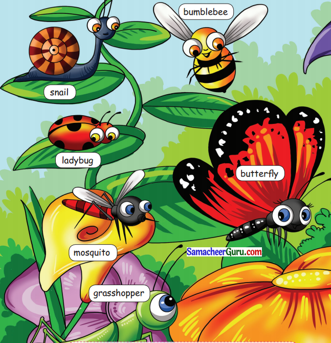 Samacheer Kalvi 3rd English Guide Term 1 Chapter 2 The Insects 47