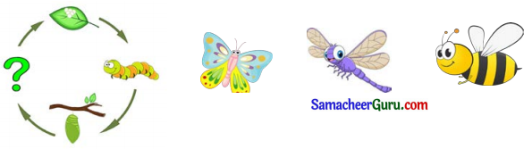 Samacheer Kalvi 3rd English Guide Term 1 Chapter 2 The Insects 8