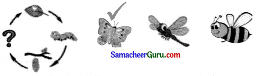 Samacheer Kalvi 3rd English Guide Term 1 Chapter 2 The Insects 9