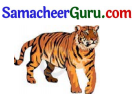 Samacheer Kalvi 3rd English Guide Term 2 Chapter 1 Seasons' Story 64