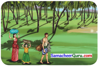 Samacheer Kalvi 3rd English Guide Term 3 Chapter 1 Our Leafy Friends 13