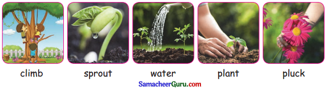 Samacheer Kalvi 3rd English Guide Term 3 Chapter 1 Our Leafy Friends 19
