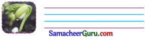 Samacheer Kalvi 3rd English Guide Term 3 Chapter 1 Our Leafy Friends 24