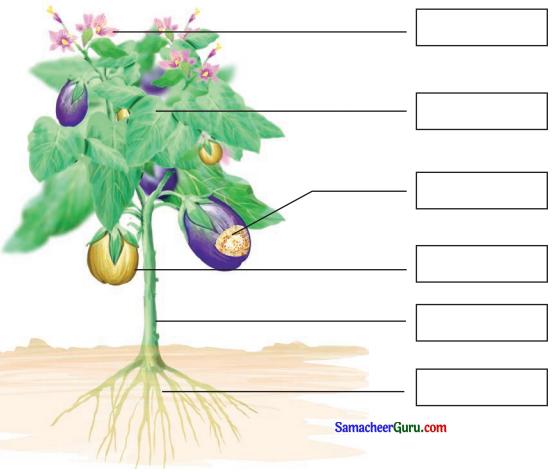 Samacheer Kalvi 3rd Science Guide Term 2 Chapter 3 தாவரங்கள் 1