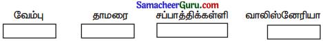 Samacheer Kalvi 3rd Science Guide Term 2 Chapter 3 தாவரங்கள் 10