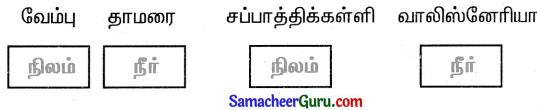 Samacheer Kalvi 3rd Science Guide Term 2 Chapter 3 தாவரங்கள் 11