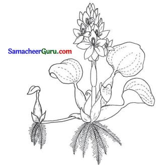 Samacheer Kalvi 3rd Science Guide Term 2 Chapter 3 தாவரங்கள் 14