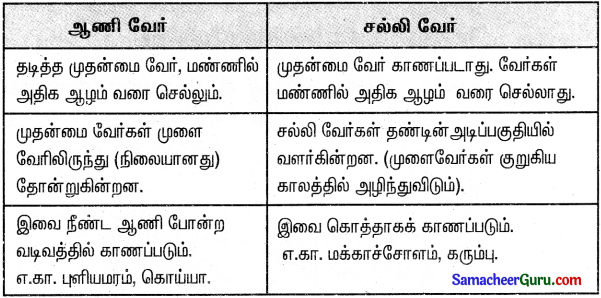 Samacheer Kalvi 3rd Science Guide Term 2 Chapter 3 தாவரங்கள் 16