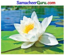 Samacheer Kalvi 3rd Science Guide Term 2 Chapter 3 தாவரங்கள் 17