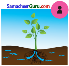 Samacheer Kalvi 3rd Science Guide Term 2 Chapter 3 தாவரங்கள் 3