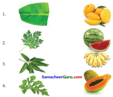 Samacheer Kalvi 3rd Science Guide Term 2 Chapter 3 தாவரங்கள் 4