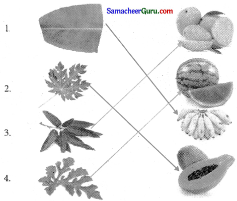 Samacheer Kalvi 3rd Science Guide Term 2 Chapter 3 தாவரங்கள் 5