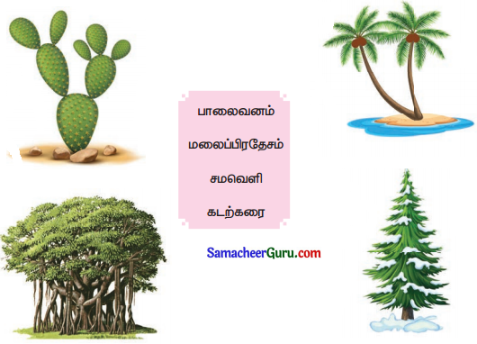 Samacheer Kalvi 3rd Science Guide Term 2 Chapter 3 தாவரங்கள் 6