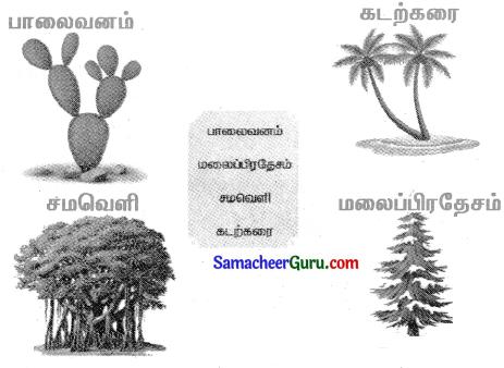 Samacheer Kalvi 3rd Science Guide Term 2 Chapter 3 தாவரங்கள் 7