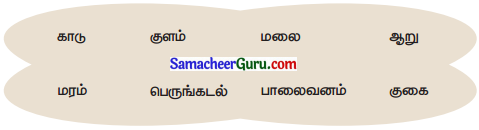 Samacheer Kalvi 3rd Science Guide Term 2 Chapter 3 தாவரங்கள் 8