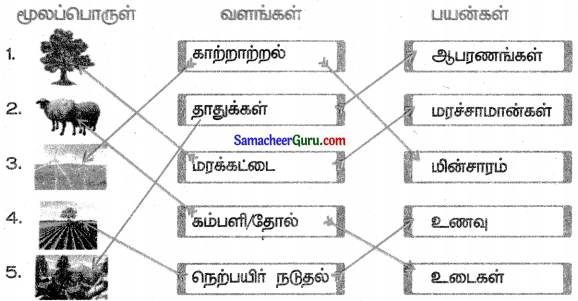Samacheer Kalvi 3rd Science Guide Term 3 Chapter 1 நமது சுற்றுச்சூழல் 3