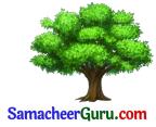 Samacheer Kalvi 3rd tamil Guide Term 2 Chapter 2 ஒன்றுபட்டால் உண்டு வாழ்வு 2