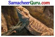 Samacheer Kalvi 3rd tamil Guide Term 2 Chapter 5 வாலு போயி கத்தி வந்தது! டும் ... டும் ... டும் ... டும் 1