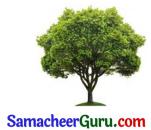 Samacheer Kalvi 3rd tamil Guide Term 2 Chapter 5 வாலு போயி கத்தி வந்தது! டும் ... டும் ... டும் ... டும் 4