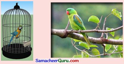Samacheer Kalvi 3rd tamil Guide Term 2 Chapter 7 நாயும், ஓநாயும் 8