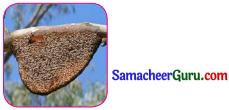 Samacheer Kalvi 3rd tamil Guide Term 2 Chapter 8 நட்பே உயர்வு 3