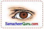 Samacheer Kalvi 3rd tamil Guide Term 3 Chapter 3 வீம்பால் வந்த விளைவு 3