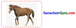Samacheer Kalvi 3rd tamil Guide Term 3 Chapter 3 வீம்பால் வந்த விளைவு 5